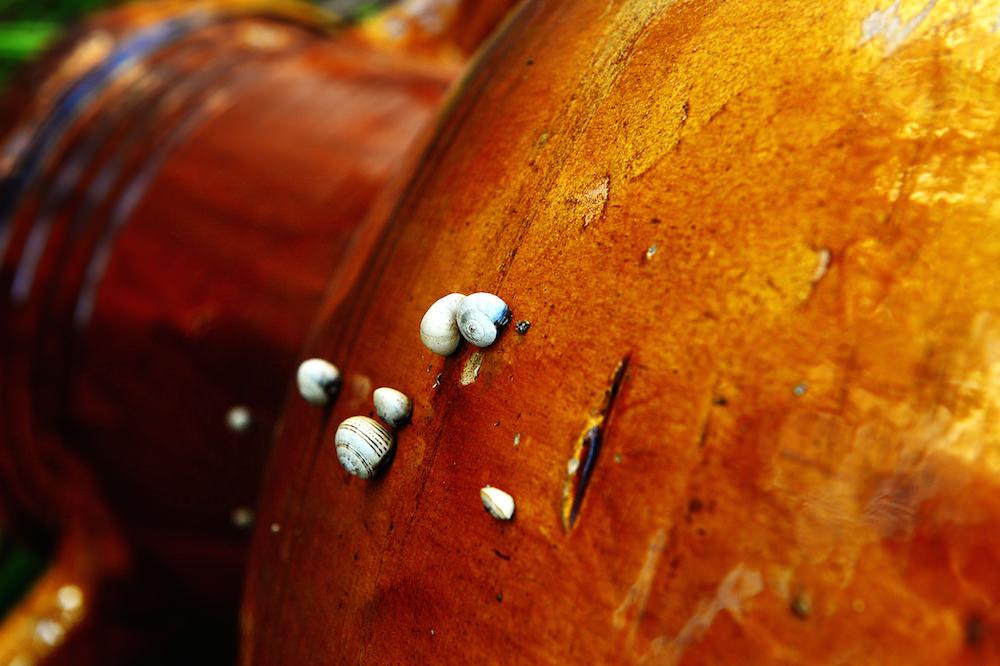 ceramiche-argilla-rossa-manufatti-casa-vestita-grottaglie-rsibilano-22