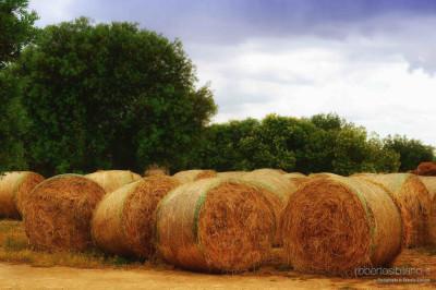 GAL Colline Joniche - le eccellenze del territorio - Foto Paesaggi